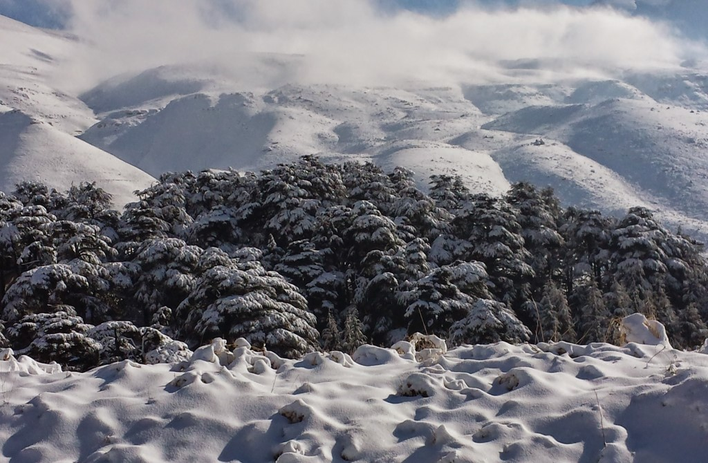 Cedars Of God Lebanon Expedition tour package